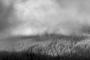 Wald vs. Wolken... von Texas Longhorn