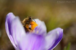 Endlich Frühling!! von H.-Dieter Fischer