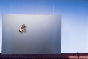 Da fliegt er! von Manfred Fessel