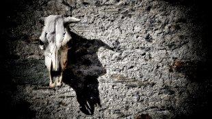 Der Tod an der Wand... von Texas Longhorn