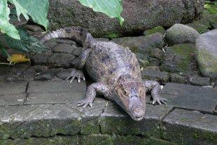 Krokodil scheint recht ärgerlich zu sein von RüdigerLinse