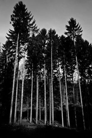 auf Stelzen waldwärts... von Bernd Unger