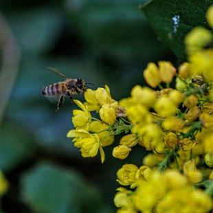 Biene von bauerkloschwitz