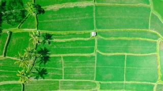 UN und Weltbank wollen Hunger und CO2-Ausstoß gleichzeitig angehen