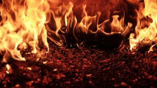 Brände wecken Sorgen vor voranschreitender Deforestation des Amazon-Regenwaldes