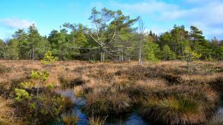 Biologischer Klimaschutz: Schleswigs-Holsteins Moore sollen zu CO2-Speichern werden
