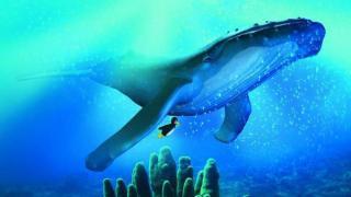 Ocean: Ein Linux-Server für die Jackentasche