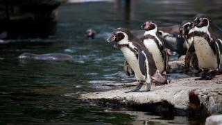 Linux von systemd befreien: Alternativen für den init-Prozess