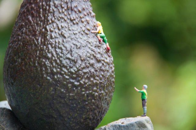 Avocado erklimmen von Ditmar Kerkhoff