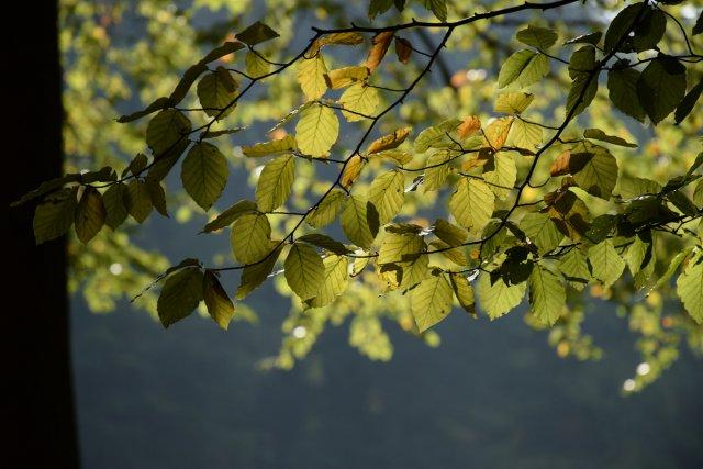 Herbstlicht von Labilla