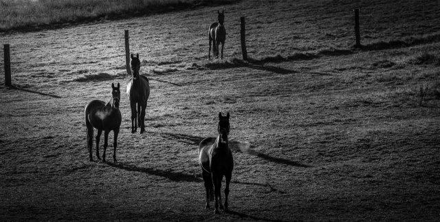 Pferde im Sonnenaufgang von biggerboy