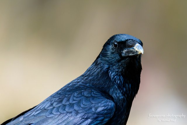 The Crow von Winwood