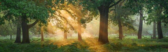 Sonnenaufgang von FelixW80
