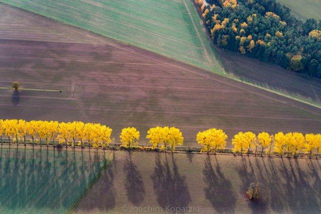 Gelbe Allee von Joachim Kopatzki