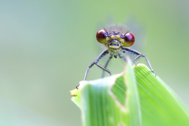 Kleine Welten I von MH-Naturfotografie