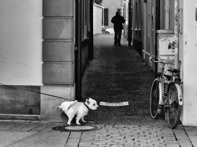 Was störts die Eiche......... von Gerhard1953