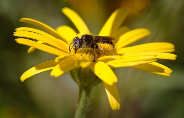 Wackelpo-Biene von dg9ncc