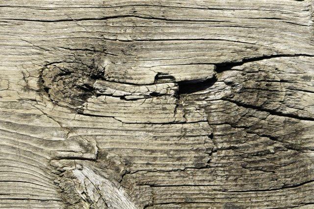 Holz von paschkepics