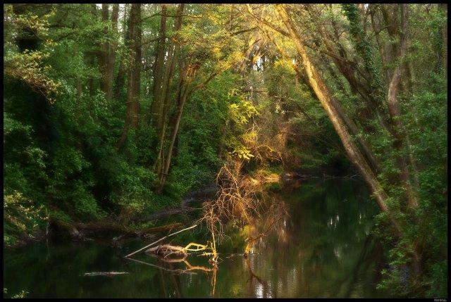 Frankfurts Pantanal von Rontrus