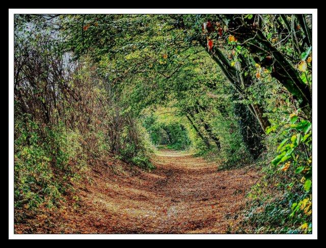 ...autumn walk... von MixMax_14