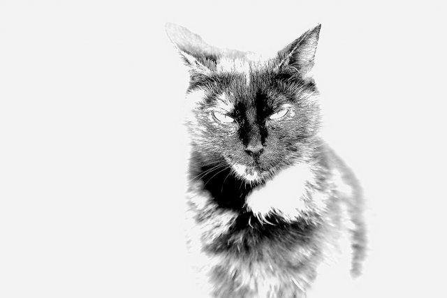 High Key Cat...3 von Texas Longhorn