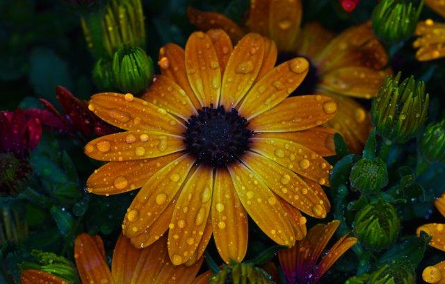 Flower Power von Secundannte