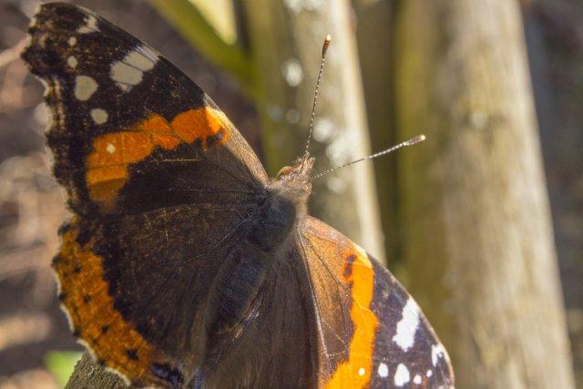 Schmetterling im Februar I von JensonR