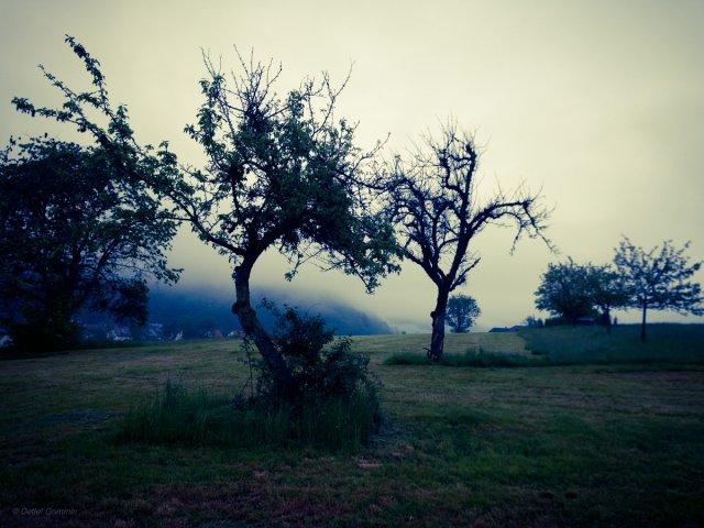 am Morgen danach von Grabownik