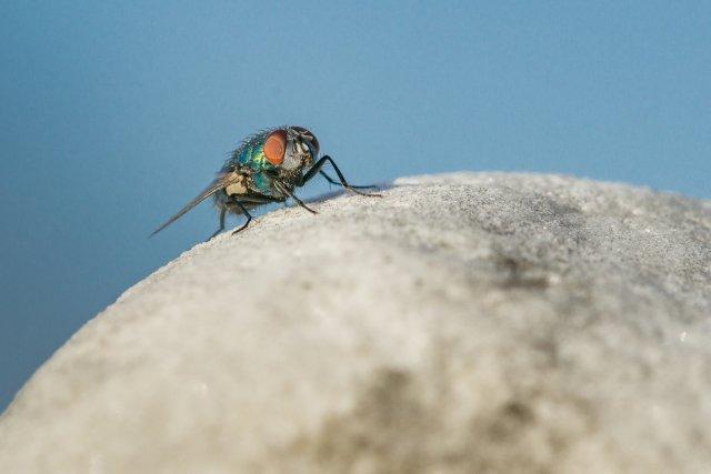 Fliege von 35mm