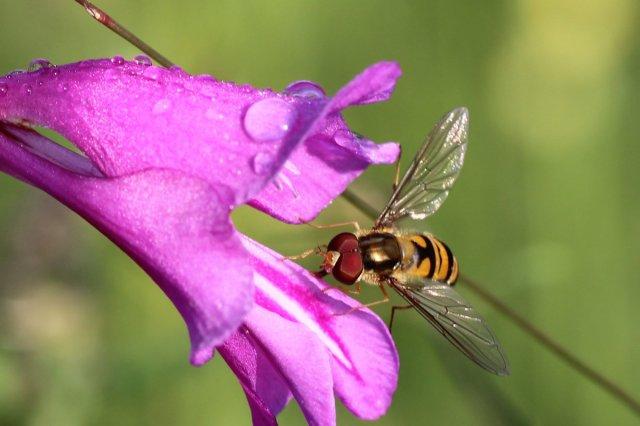 Zarte Blüte - zarte Flügel von foto-chris