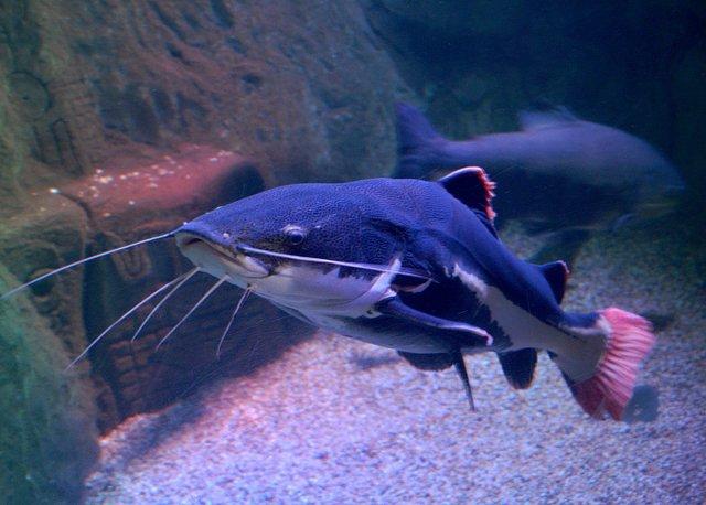 Sea Life von Jademax