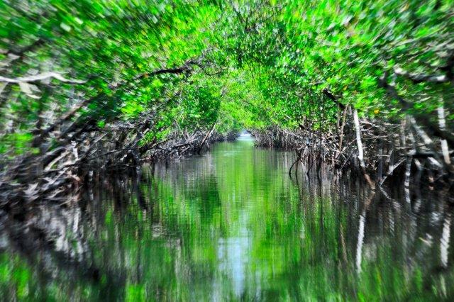 In den Mangrovenwäldern von cwassermann