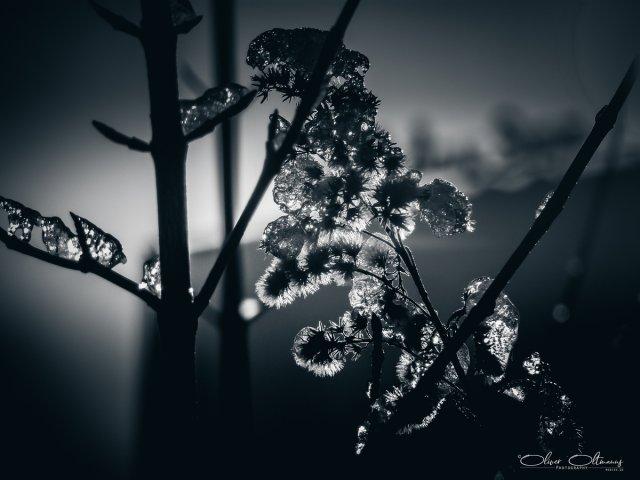 Frozen Branches von MoBIoS