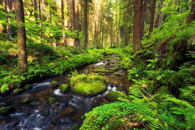A River Runs Through It von dave-derbis