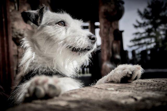Hundeträume im Urlaub... von Texas Longhorn