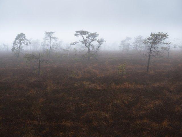 Schwarzes Moor von FelixW80