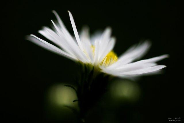 light flower von Antubiss