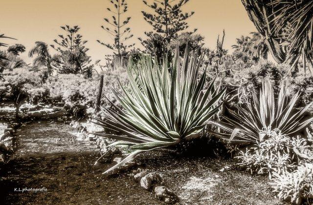 """""""KLeiner Kaktus"""" von lachnummer (1)"""