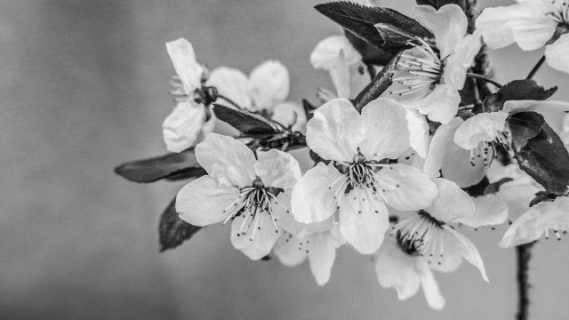 Obstblüte von snuecke