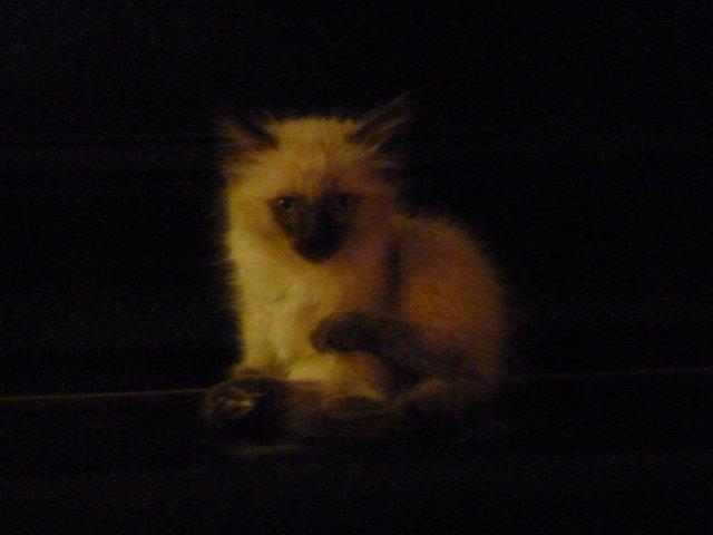 Kitten von fipi