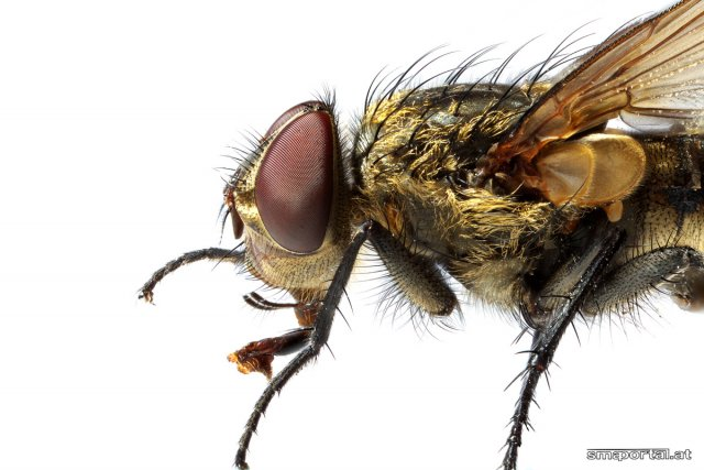 Die Fliege von smaportal