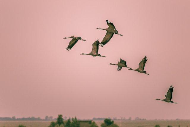 Zugvögel bei Zingst . . . . . von Bernd Seibel