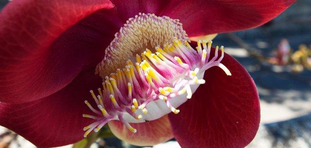 Blüte von DiJay