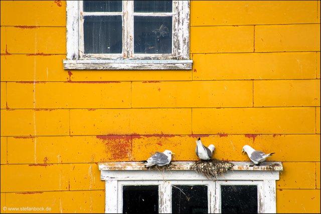 Pigeons Nusfjord Lofoten von Stefan Bock