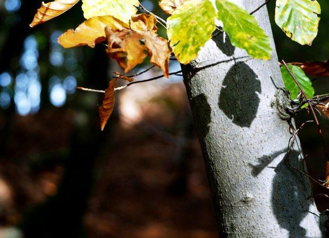 Schattenspiel von Eberhard  Schmidt-Dranske