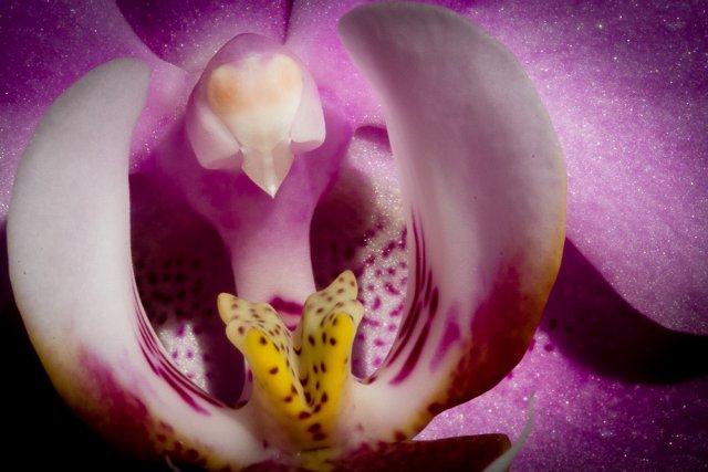 Orchidee_nah_1 von DiSe.fotografie