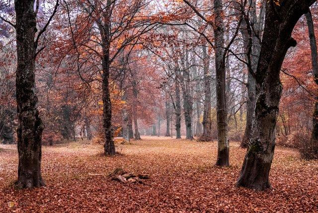 Herbst im Schlosspark von thphoto