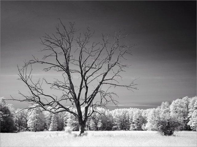 Toter Baum von schokopanscher