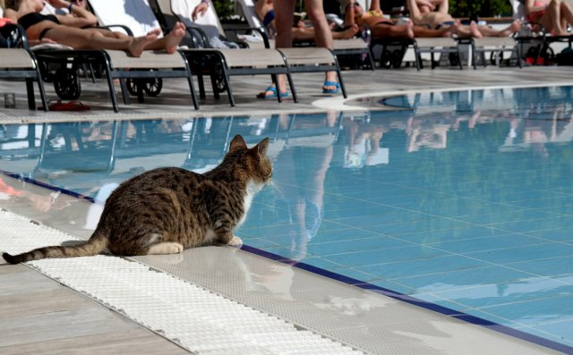 Hotel.Katze. von Mira1959