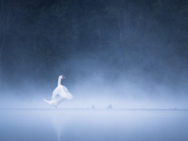 Schwan im Nebel von FelixW80